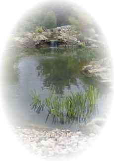 pond construction cleaning and maintenance Gloucestershire